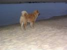 Kimba von der Wolfsangel