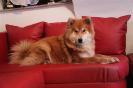 Nouka von der Wolfsangel