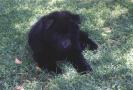 Rye vom Schwarzen Ulan